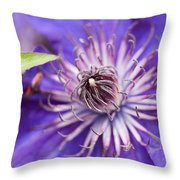 Pretty Purple Clematis Throw Pillow