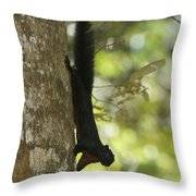 Prevosts Squirrel Facing Downward Throw Pillow
