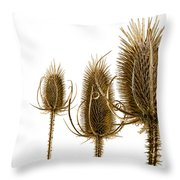 Prickly Teasels On White Throw Pillow