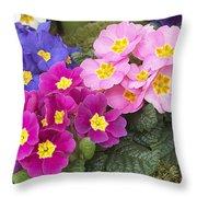 Primrose Primula Sp Flowers Throw Pillow