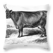 Prize Devon Cow, 1855 Throw Pillow