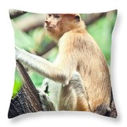 Proboscis Monkey Throw Pillow