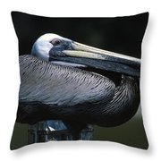 Profile Of Brown Pelican On Post Throw Pillow
