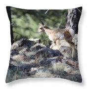 Pronghorn Antelope Fawn Throw Pillow