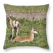 Pronghorn Antelope With Young Throw Pillow