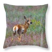 Pronghorn Fawn Throw Pillow