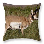Pronghorn Male Custer State Park Black Hills South Dakota -1 Throw Pillow