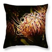 Protea Flower 10 Throw Pillow