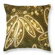 Protozoa, Paramecium, Lm Throw Pillow