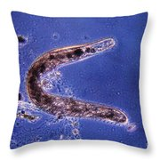 Protozoa, Spirostoma, Lm Throw Pillow
