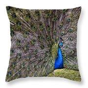 Proud Peacock At Leeds Castle Throw Pillow