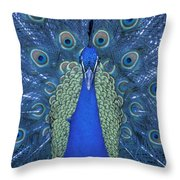 Proud Peacock Throw Pillow