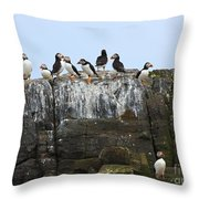 Puffins On A Cliff Edge Throw Pillow