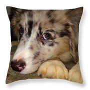 Puppy Face Throw Pillow