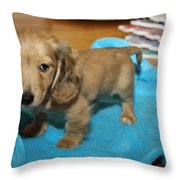 Puppy On Blue Blanket Throw Pillow