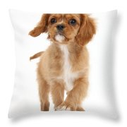 Puppy Trotting Foward Throw Pillow