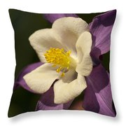 Purple And White Columbine Blossom Facing The Sun - Aquilegia Throw Pillow