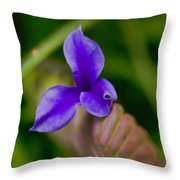 Purple Bromeliad Flower Throw Pillow by Douglas Barnard