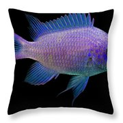 Purple Chromis Throw Pillow