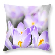 Purple Crocus Blossoms Throw Pillow
