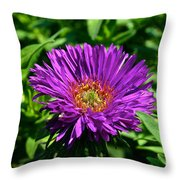 Purple Dome New England Aster Throw Pillow