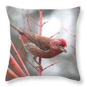 Purple Finch Throw Pillow