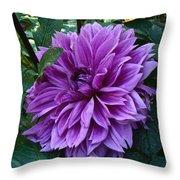 Purple Haze Dahlia Throw Pillow