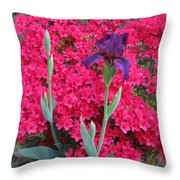 Purple Iris In Pink  Throw Pillow
