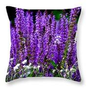 Purple Lavender Flower In Bloom  Throw Pillow
