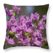 Purple Of The Bougainvillea Blossoms Throw Pillow