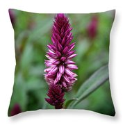 Purple Parfait Throw Pillow