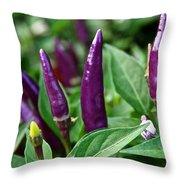 Purple Pepper Life Cycle  Throw Pillow