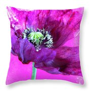 Purple Poppy On Pink Throw Pillow