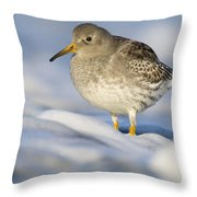 Purple Sandpiper Calidris Maritima Throw Pillow