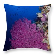 Purple Sea Fan In Raja Ampat, Indonesia Throw Pillow