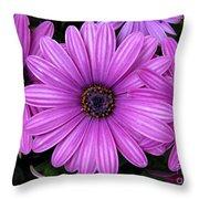Purple Trio Throw Pillow
