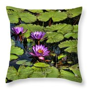 Purple Water Lilies - Nymphaea Capensis  Throw Pillow