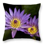 Purple Water Lilies Throw Pillow