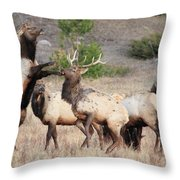 Put Up Your Dukes Throw Pillow