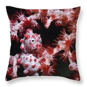 Pygmy Seahorse, Indonesia Throw Pillow