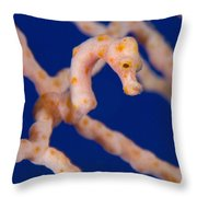 Pygmy Seahorse On Sea Fan, Papua New Throw Pillow by Steve Jones