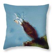 Pyxicola Sp Throw Pillow