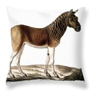 Quagga (equus Quagga) Throw Pillow