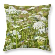 Queen Anne's Lace In All Its Glory Throw Pillow