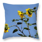 Quicksilver Sun Throw Pillow