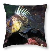 Quillback Rockfish  Throw Pillow