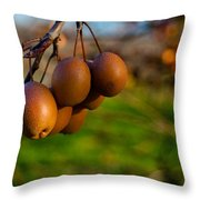 Quince In The Early Moning Sun Throw Pillow