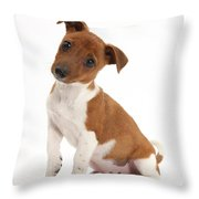 Quizzical Puppy Throw Pillow