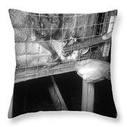 Rabid Fox, 1958 Throw Pillow