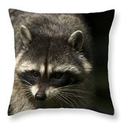 Raccoon 2 Throw Pillow